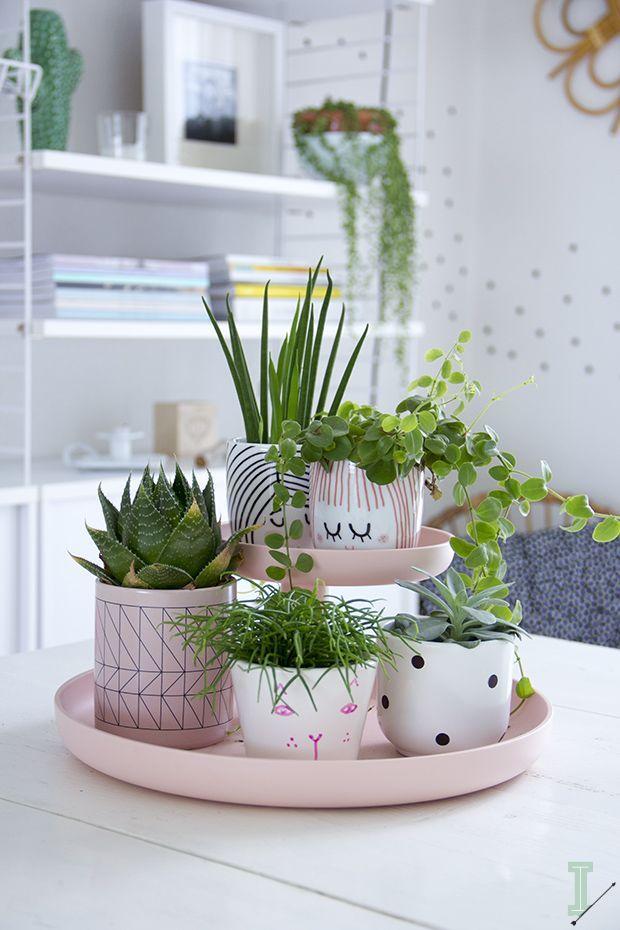 biljke srbija prodaja