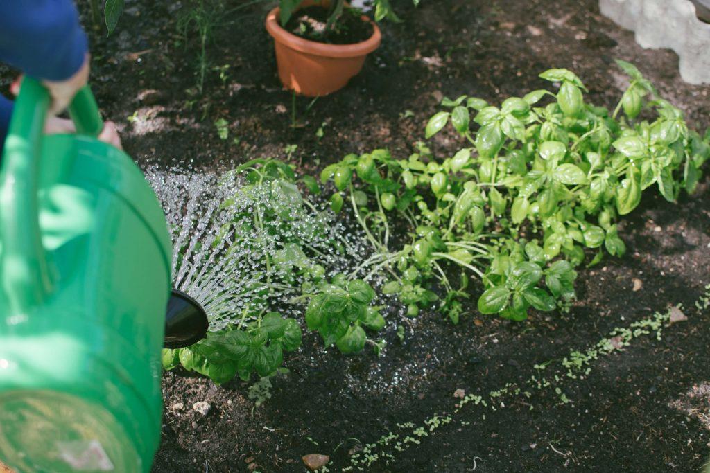 zalivanje biljaka leti