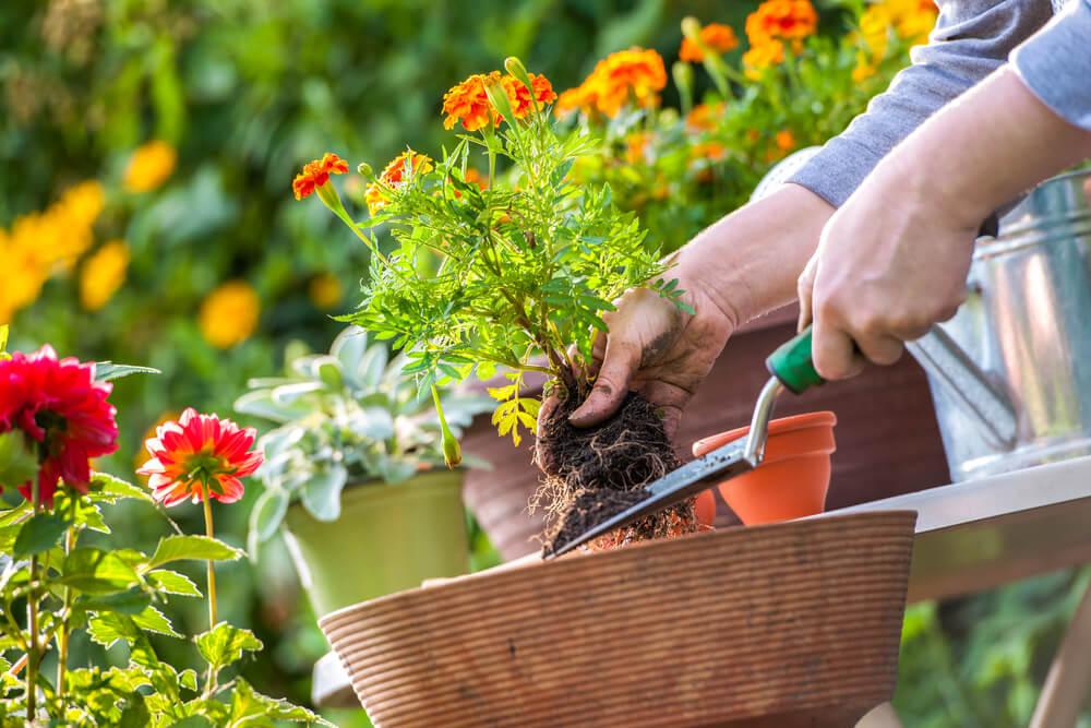 Saveti za negu biljaka