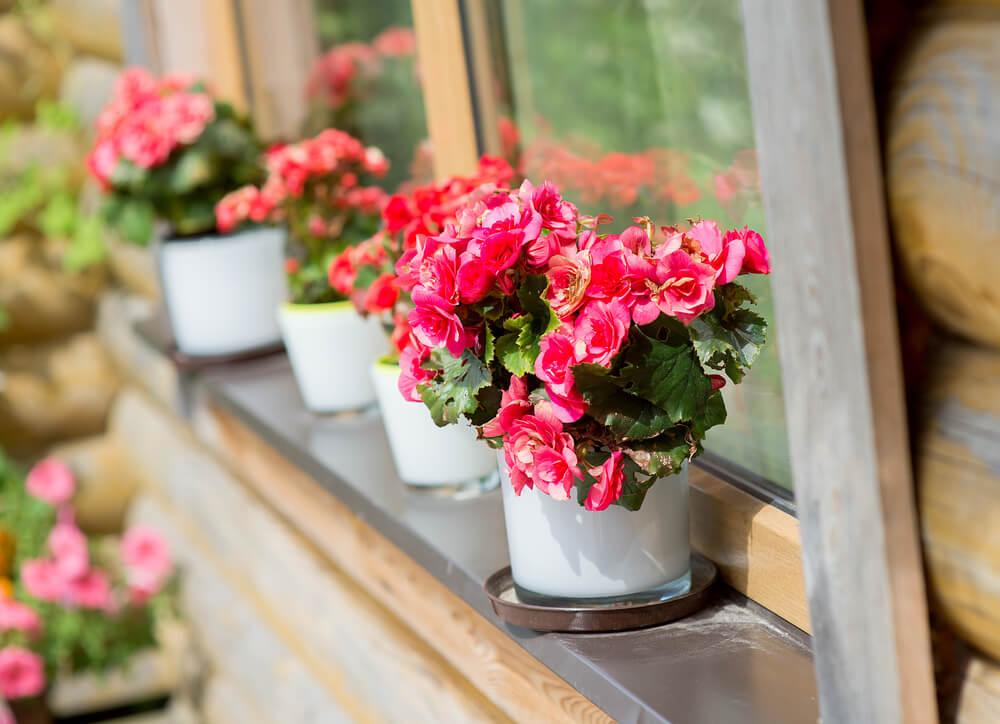 Cveće koje je lako za održavanje