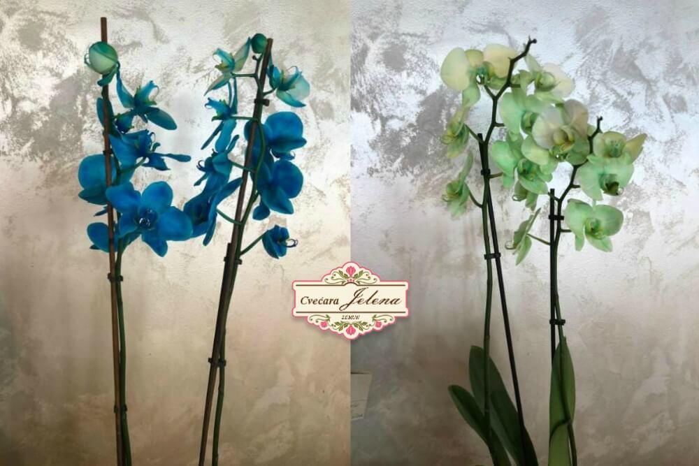 Orhideje u saksiji