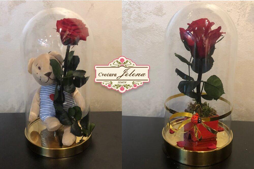 Dehidrirane ruže u staklenom zvonu