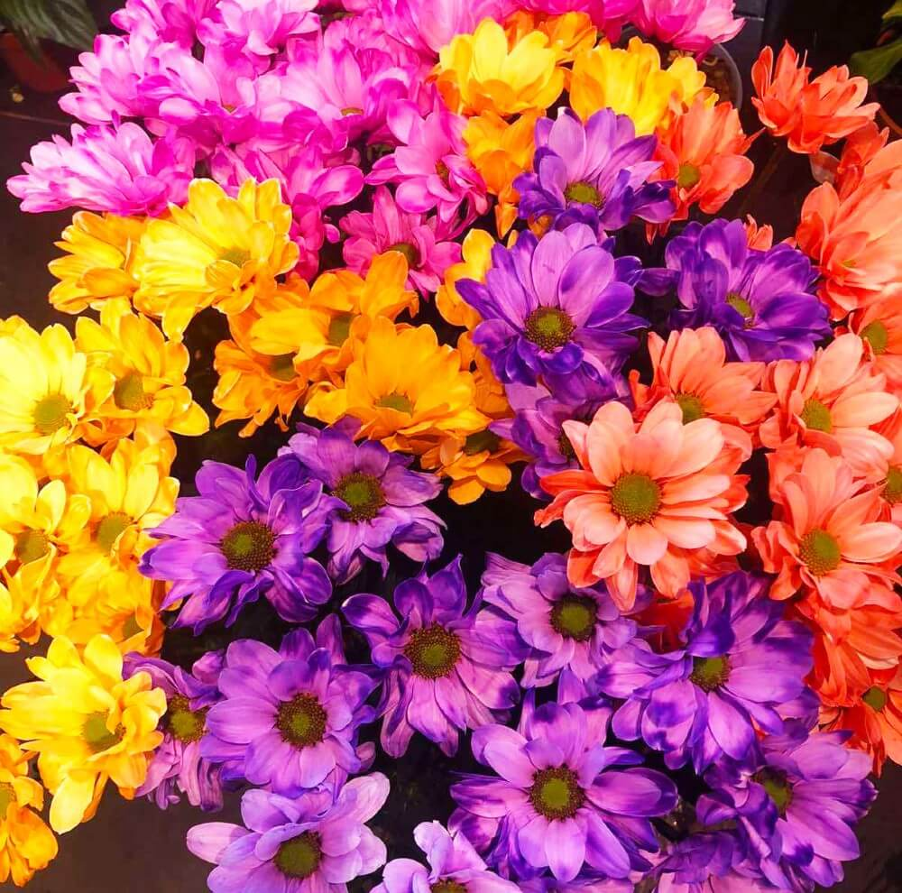 cveće za proleće 2021