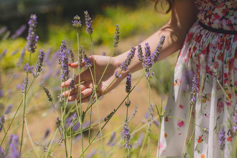 biljke protiv komaraca, cvećara Jelena